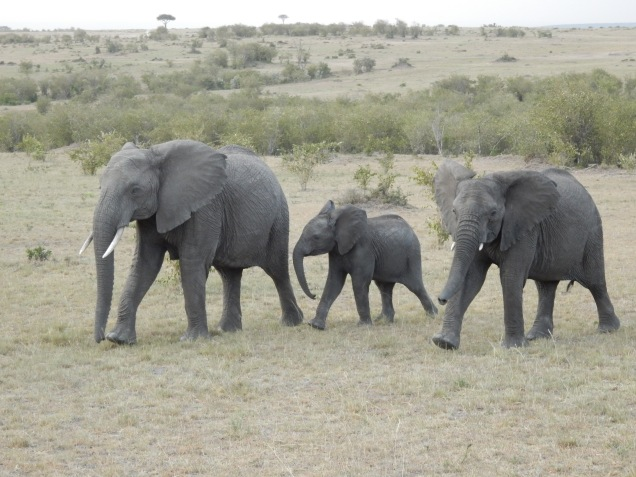 BLOG elephant family