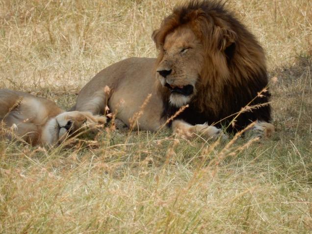 BLOG lions